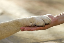 GILLES DELAYE Educateur canin 71 *