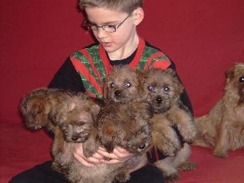 Elevage DES SABLES DU NORD Sealyham et norfolk Terrier rodhesian