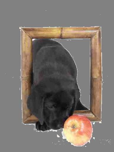 LE GRAIN DE FOLY Education canine*
