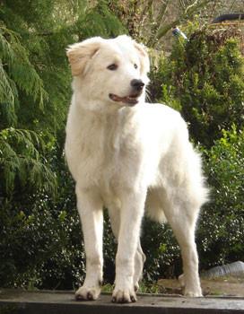 FECC Formation d'educateur comportementaliste canin*