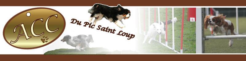 Club dressage canin du PIC St LOUP