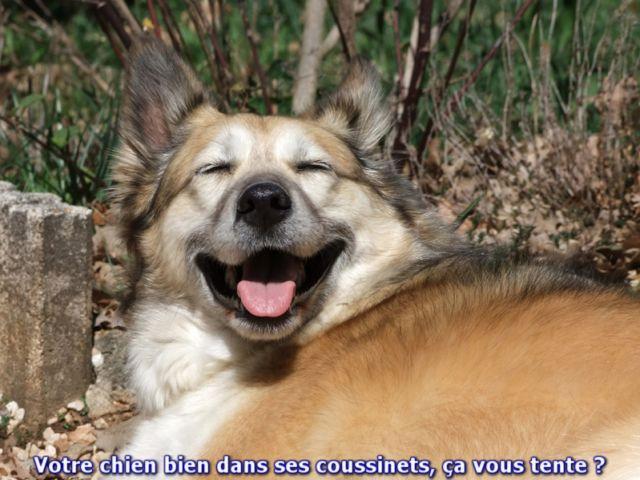 DOM EDUC CANIN DANIEL GENIN éducateur canin comportementaliste à domicile *