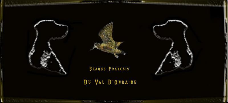Elevage DU VAL D ONDAINE braque francais griffon korthal*