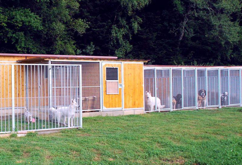 Pension canine AU DOUBS CHENIL Elevage Berger Australien Berger Blanc Suisse *