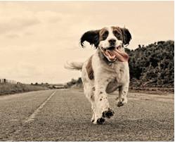 NATHALIE MORTREUX Comportementaliste, spécialiste de la relation homme / chien *