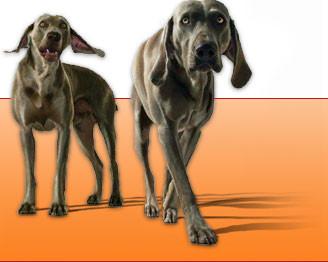 LAURE ALLOUCHERY Education canine à domicile en picardie