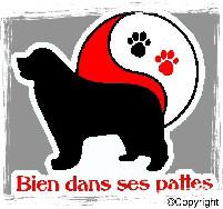 BIEN DANS SES PATTES Education, comportement canin  *