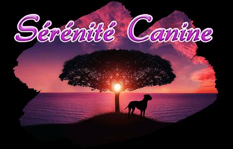 SERENITE CANINE educateur comportementaliste