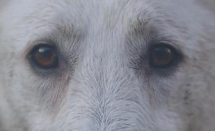 CAMILLE LE ROUX Comportementaliste et éducateur canin - Cynologiste