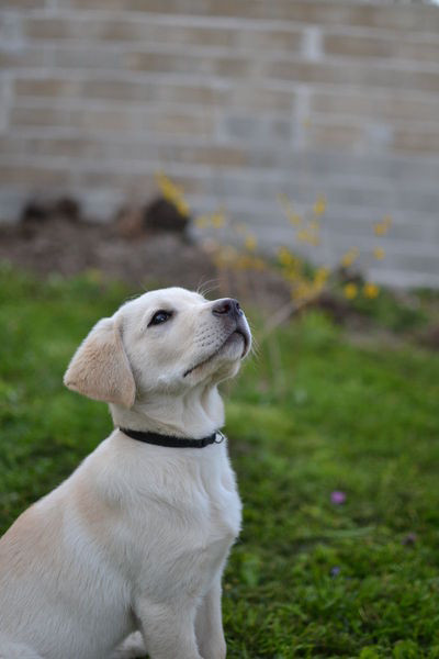 PHILIPPE CHAPOT Comportementaliste Canin