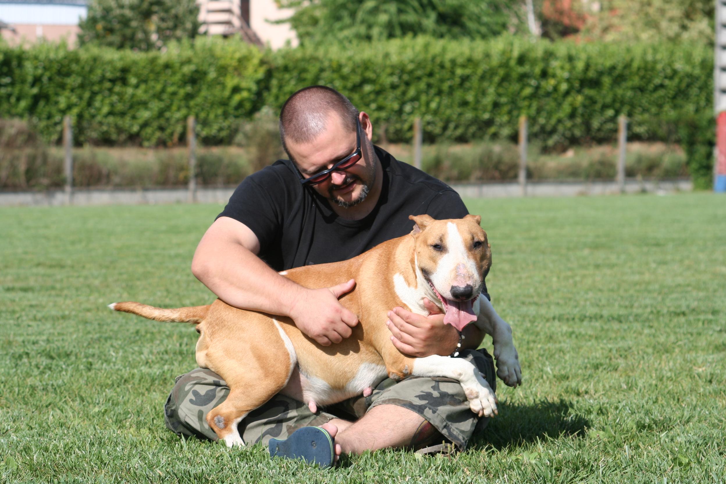 elevage Bull terrier standard