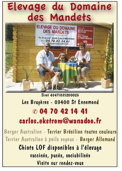 Elevage DOMAINE DES MANDETS Bergers Allemands, Australien Sylki terrier Terrier Brésilien *