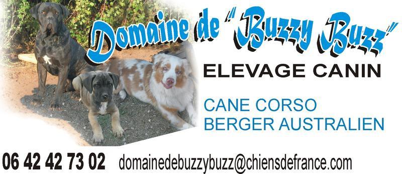 Elevage DOMAINE DE BUZZY BUZZ Cane Corso *