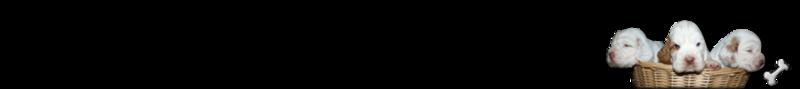 Eleveurs ADRILINES D OPALE Cocker Labradors Clumber Spaniel