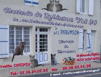 Chatterie DE ROBINSON VAL 36 Chartreux*