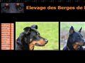 Elevage DES BERGES DE L ISAC beauceron *