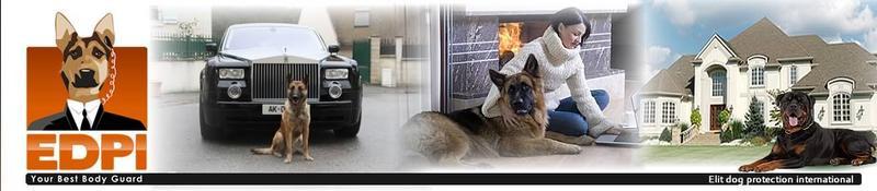 EDPI ELITE DOG éducation canine Paris *