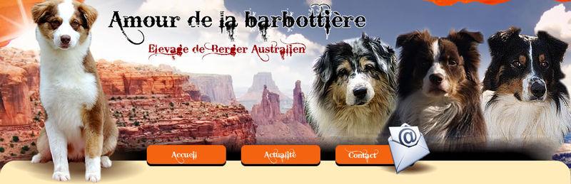 Elevage AMOUR DE LA BARBOTTIERE Berger Australien  *