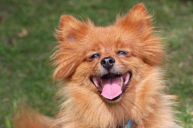 HAPPsY Dog : Comportementaliste animalier*