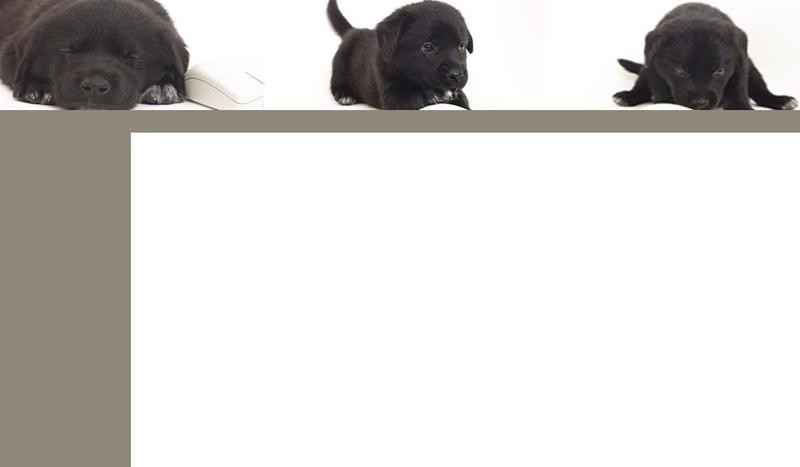club de dressage canin d Avignon