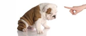 ANIMA LOVE Dressage chien et education canine à domicile Paris & région parisienne *