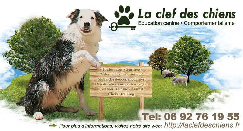 LA CLEF DES CHIENS éducation canine positive à La Réunion*