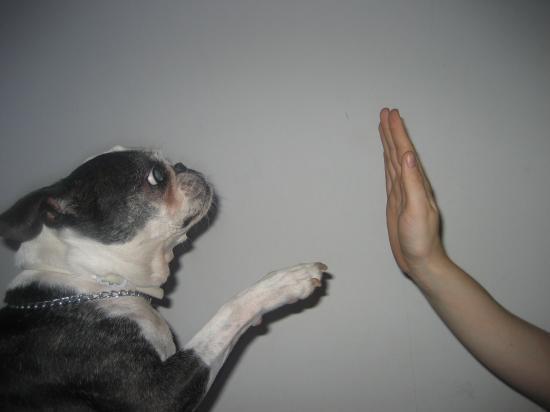 ESTELLE EVIN Comportementaliste canin 06 *