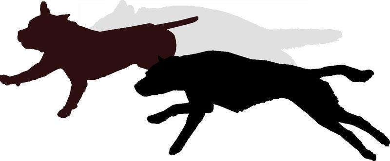 TERRE DE CHIENS Education canine, Le Perray en Yvelines*