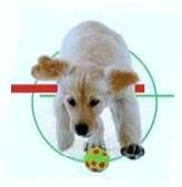 CLUB CANIN ST MARS LA BRIERE éducation obéissance canine*