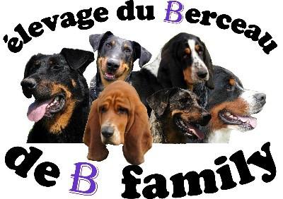 Elevage DU BERCEAU DE B FAMILY Berger de Beauce*