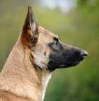 KYNOS Joris LOEFF éducation dressage chien de compagnie *