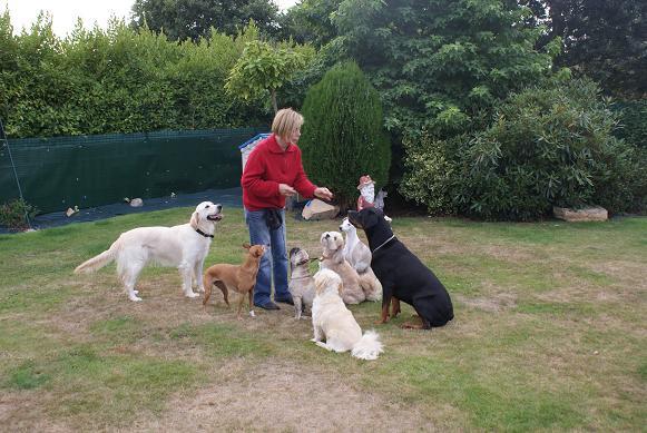 ASPA ODILE JARRET CHENIER éducateur canin *