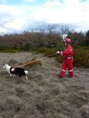 FRANCE SECOURS RECHERCHE Chien de recherche, chien de sauvetage *
