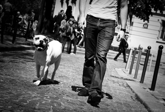 GUILLAUME DELHOMMEAU Dressage et éducation canine région parisienne et oise *