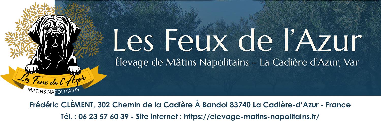 """ELEVAGE """"LES FEUX DE L'AZUR"""" de MATINS NAPOLITAINS"""