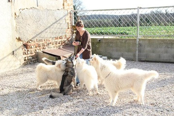 Elevage LETOILE DOURALE Husky sibérien et Samoyede *
