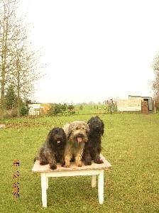 Elevage A DREAM OF BEAR D chiens berger de catalan
