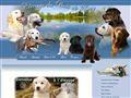 Elevage DU BOIS DE LUCY Golden retriever Labrador