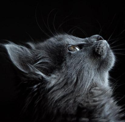Les meilleures croquettes pour chat