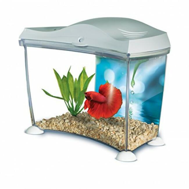 Aquarium pour betta kit Marina Fluval 6,7 litres