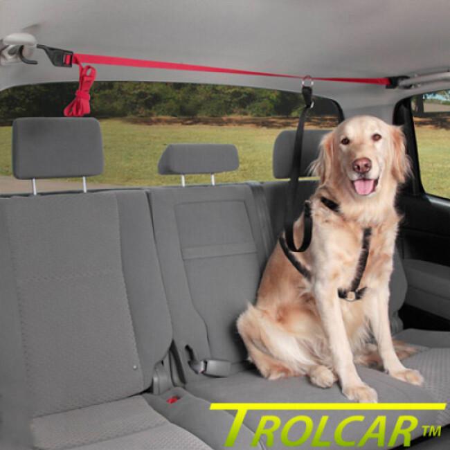 Attache trolley de sécurité automobile pour chien Trolcar™