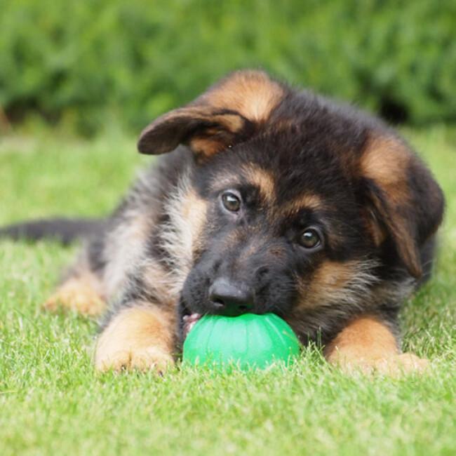 Balle Everlasting très résistante pour chien