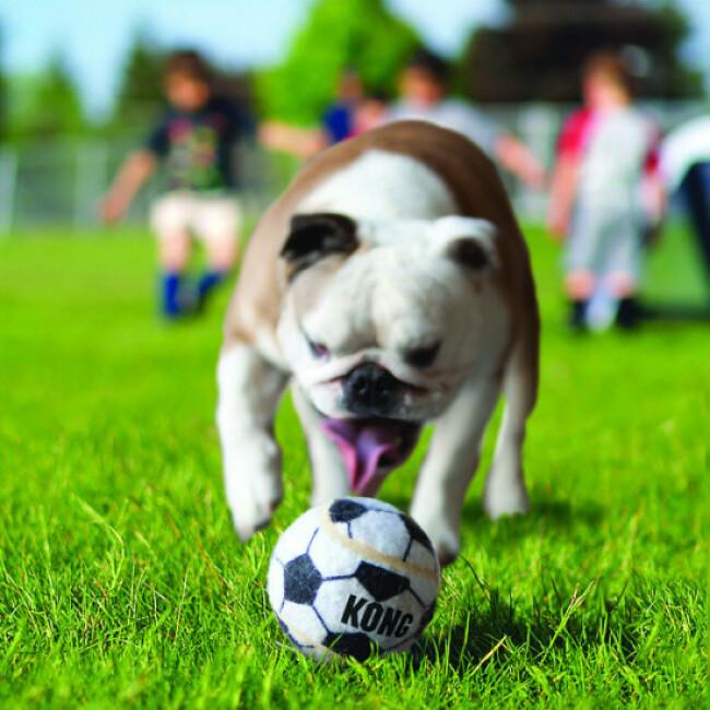 Balles en caoutchouc pour chien KONG Sport Ball