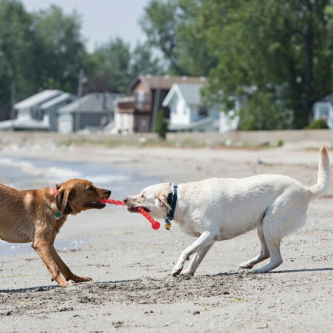 Barre KONG Safestix en élastomère pour un ou plusieurs chiens