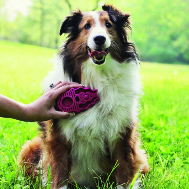 Brosse souple pour chien à poils longs Zoom Groom KONG