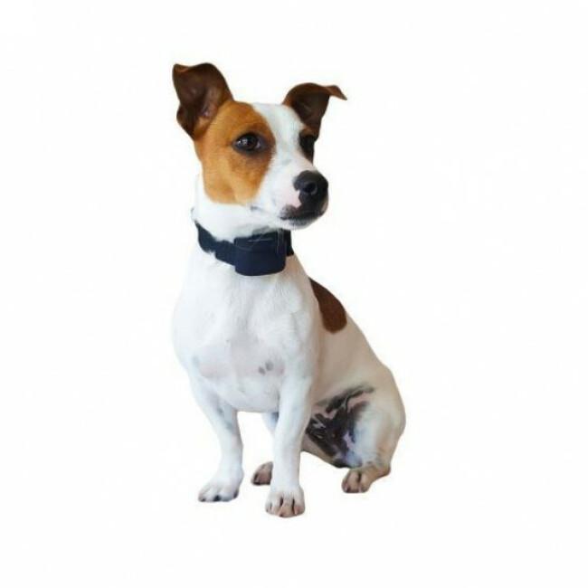 Canifugue numaxes clôture électronique anti fugue pour chien