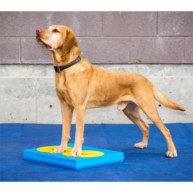Cibles d'entraînement pour chien FitPaws lot de 4