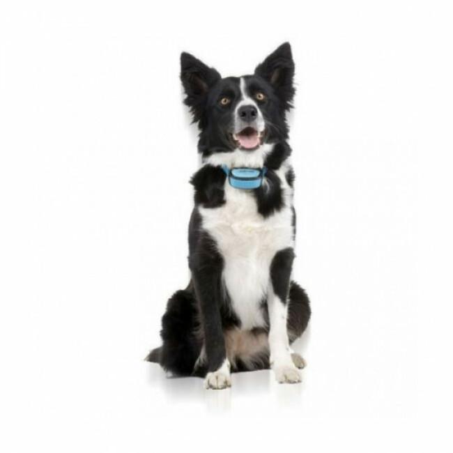 Collier ANTI ABOIEMENT pour chien IKI Pulse Numaxes