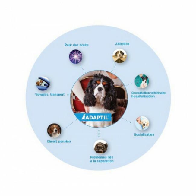 Collier anti-stress Adaptil pour chiens