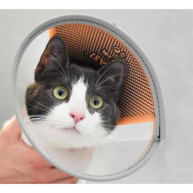 Collier carcan avec attache velcro pour chien et chat Velfast